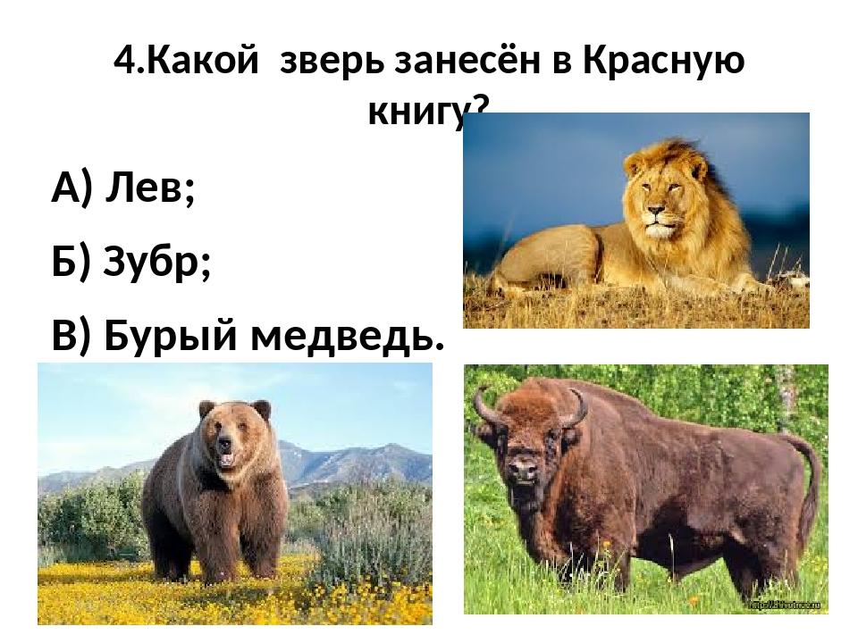 4.Какой зверь занесён в Красную книгу? А) Лев; Б) Зубр; В) Бурый медведь.