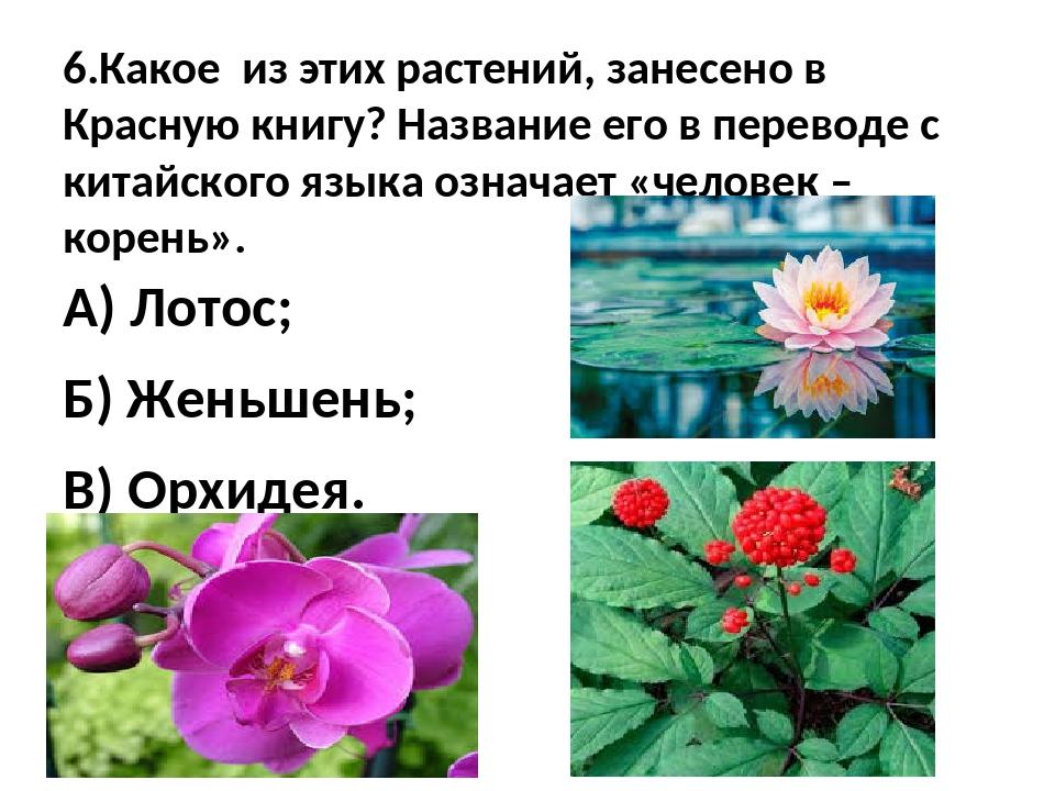 6.Какое из этих растений, занесено в Красную книгу? Название его в переводе с...