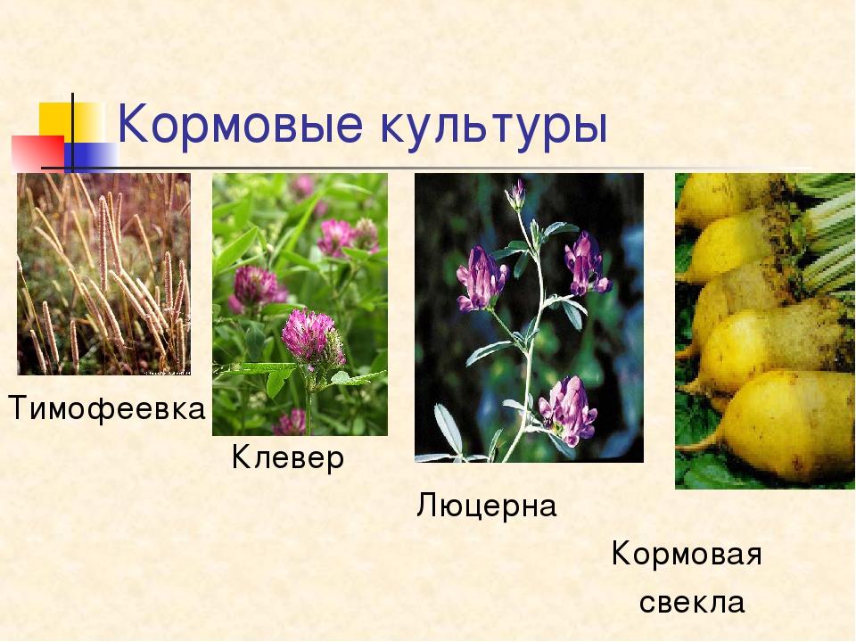 кормовые растения названия и фото словам, часть