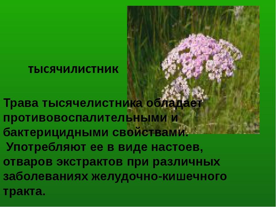 Трава тысячелистника обладает противовоспалительными и бактерицидными свойств...
