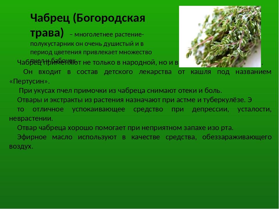 Чабрец (Богородская трава) – многолетнее растение-полукустарник он очень души...