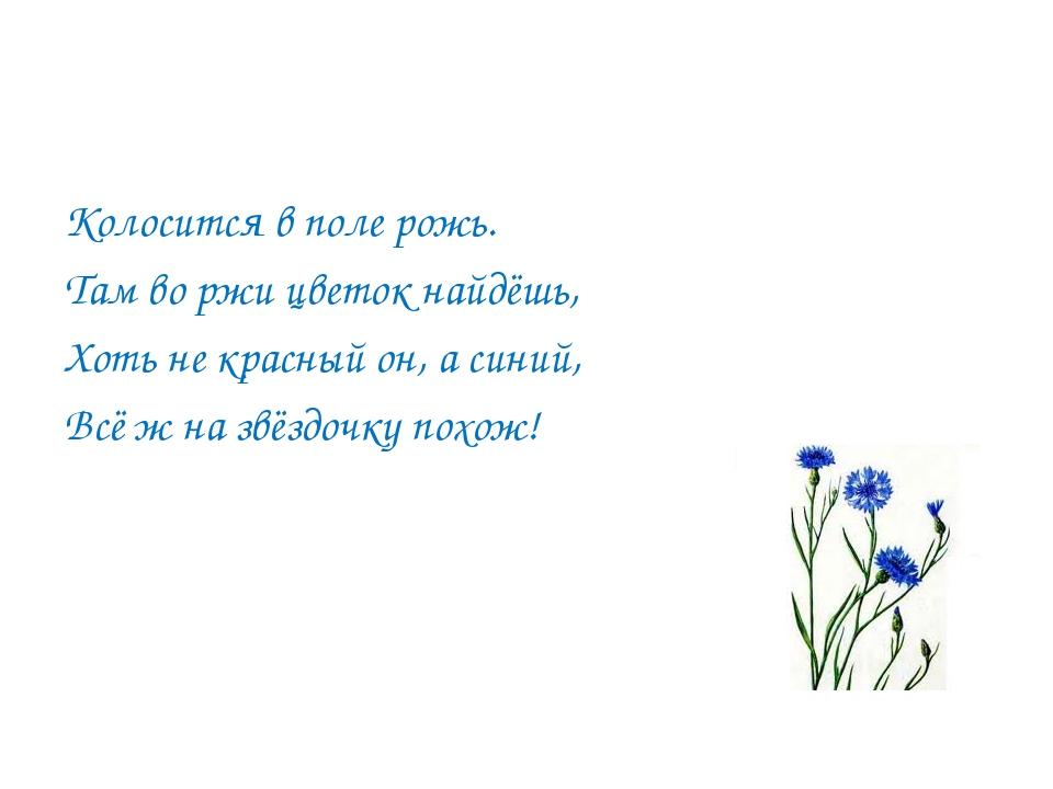 Колосится в поле рожь. Там во ржи цветок найдёшь, Хоть не красный он, а синий...