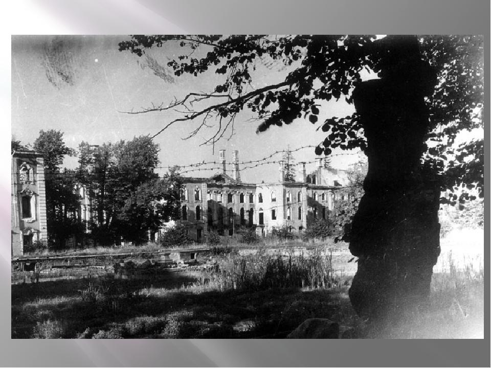 Петергофский десант немецкие фото