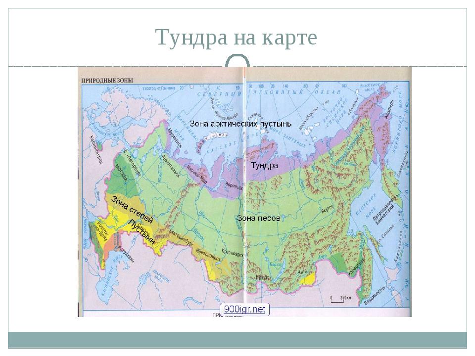 Тундра на карте