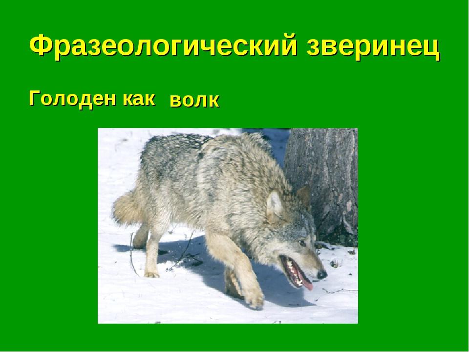 Фразеологический зверинец Голоден как . . . волк