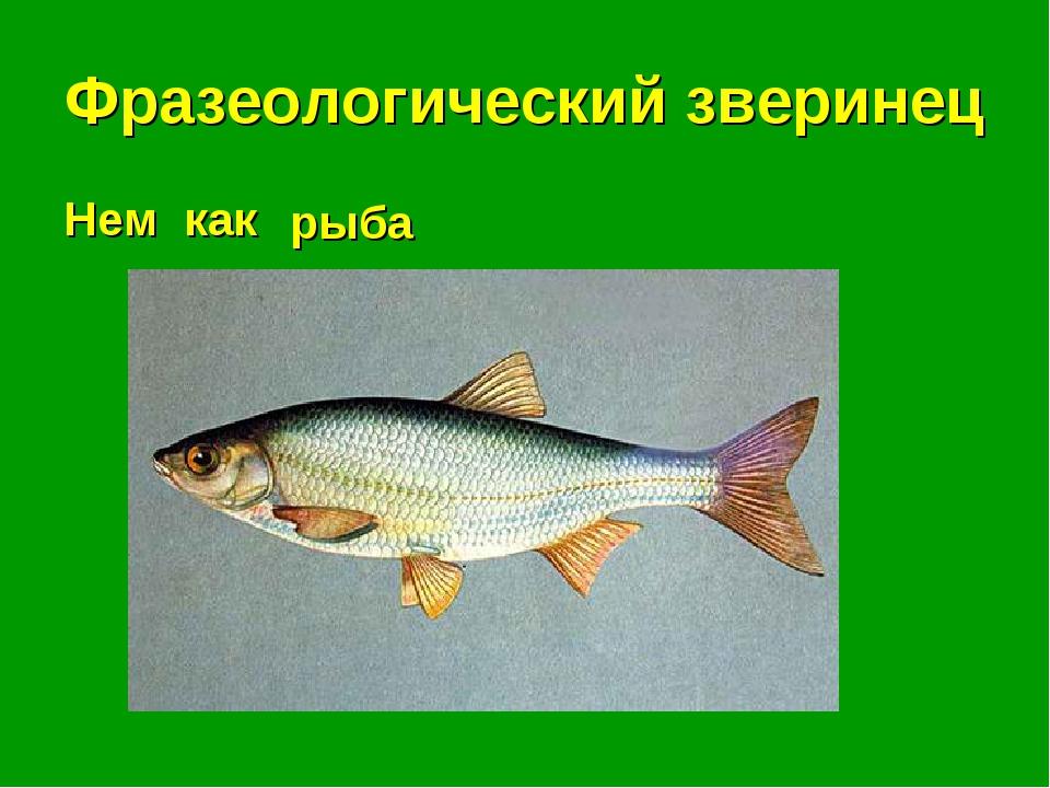Фразеологический зверинец Нем как . . . рыба
