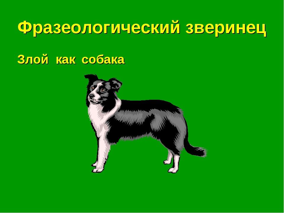 Фразеологический зверинец Злой как . . . собака