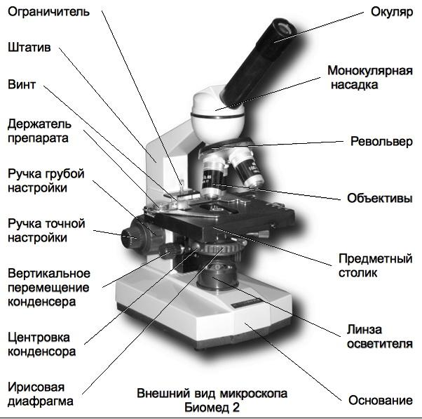 микроскоп части картинки отметить, что мелания