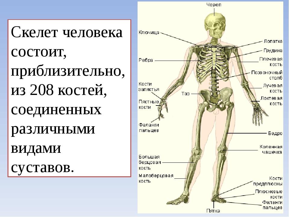 Строения костей человека в картинках