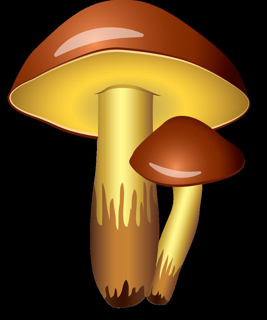 Цветные картинки грибов
