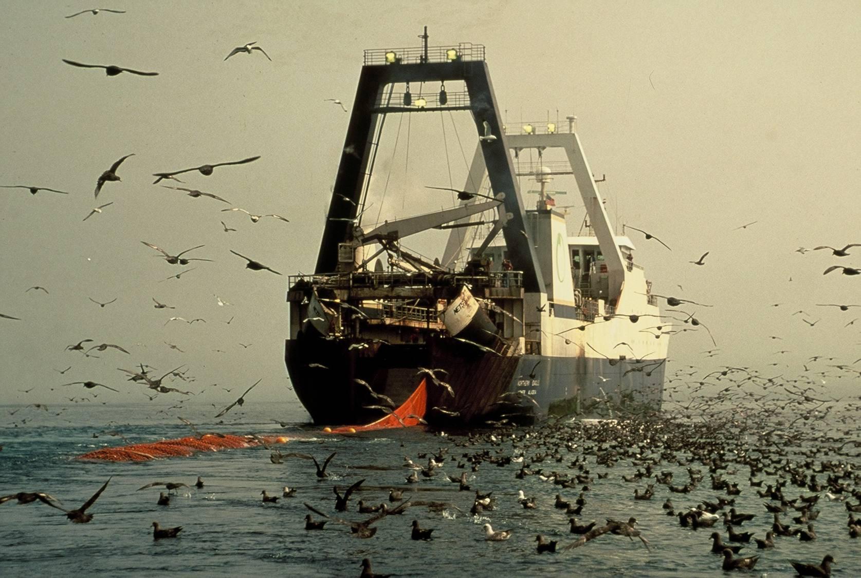 картинки судно рыба тот