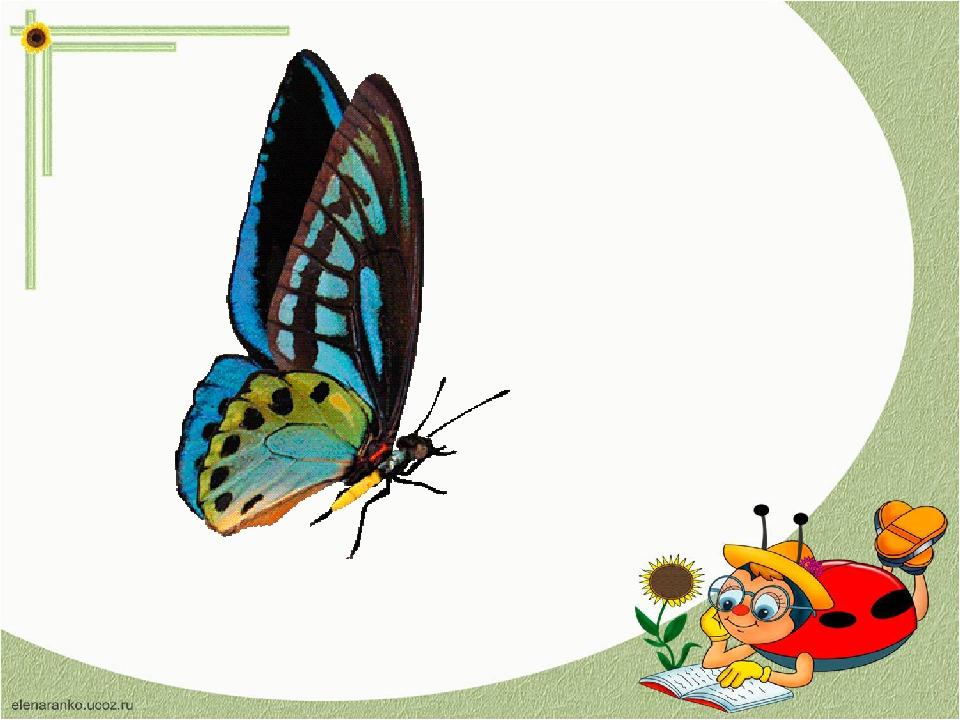 Картинки анимашки бабочки для презентаций
