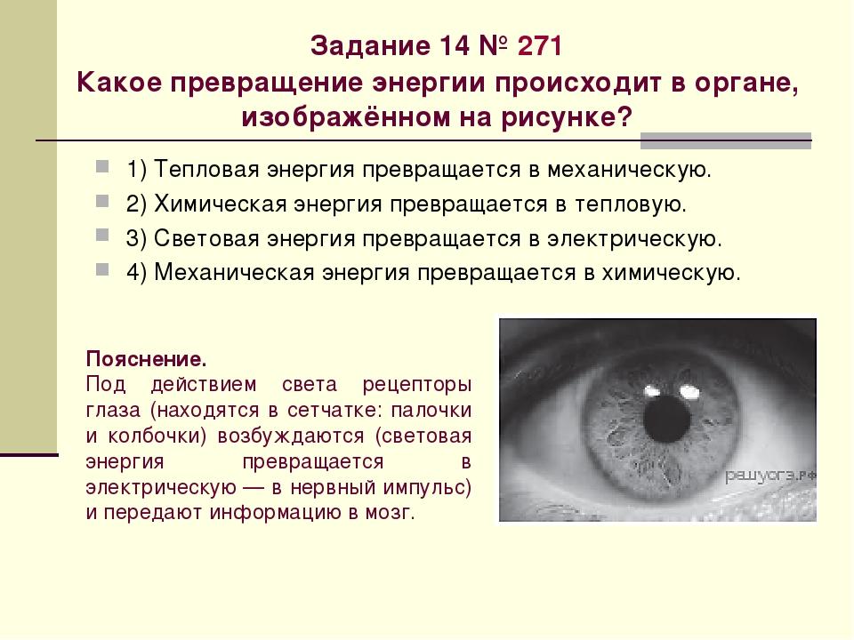 Задание 14№271 Какое превращение энергии происходит в органе, изображённом...