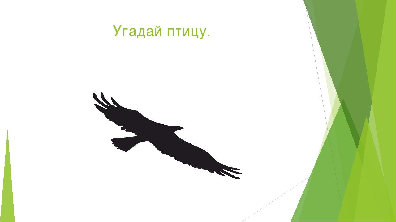 угадай птицу картинки