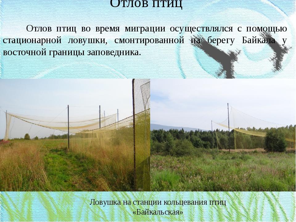 Отлов птиц Отлов птиц во время миграции осуществлялся с помощью стационарной...