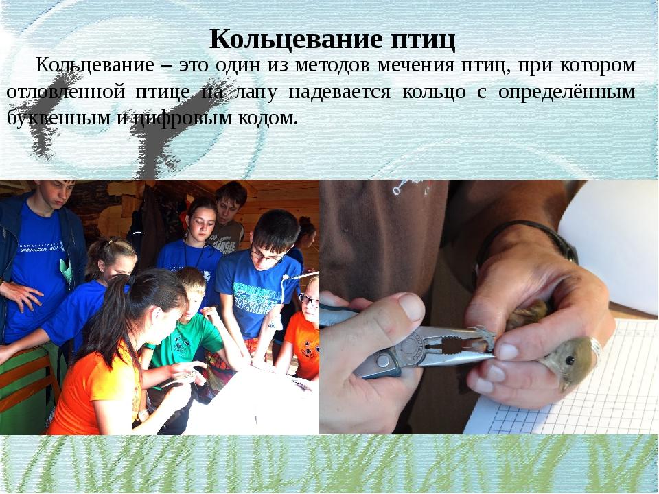 Кольцевание птиц Кольцевание – это один из методов мечения птиц, при котором...
