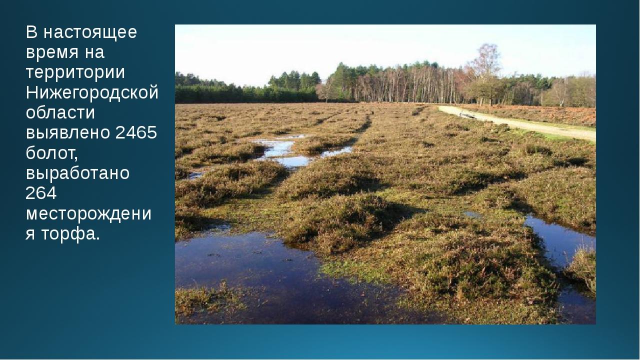 В настоящее время на территории Нижегородской области выявлено 2465 болот, вы...