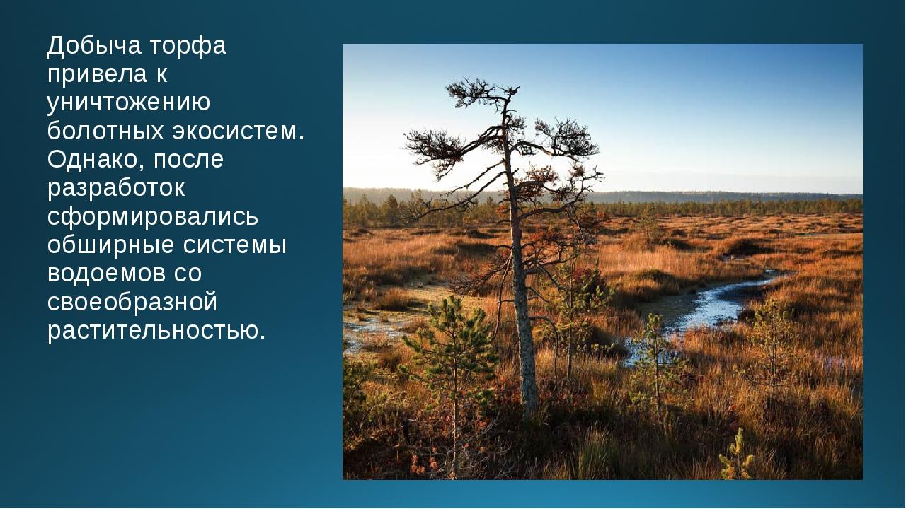 Добыча торфа привела к уничтожению болотных экосистем. Однако, после разработ...