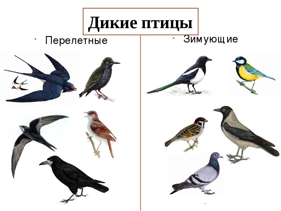 Картинки про перелетных птиц для детей