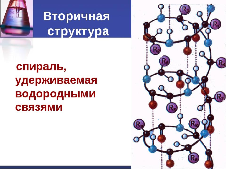 спираль, удерживаемая водородными связями Вторичная структура