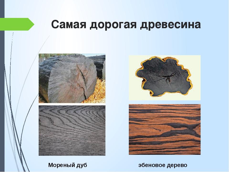 Самая дорогая древесина эбеновое дерево Мореный дуб
