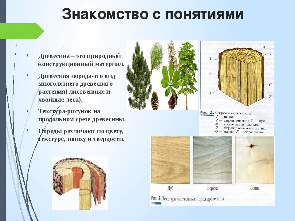 Знакомство с понятиями Древесина – это природный конструкционный материал. Др...