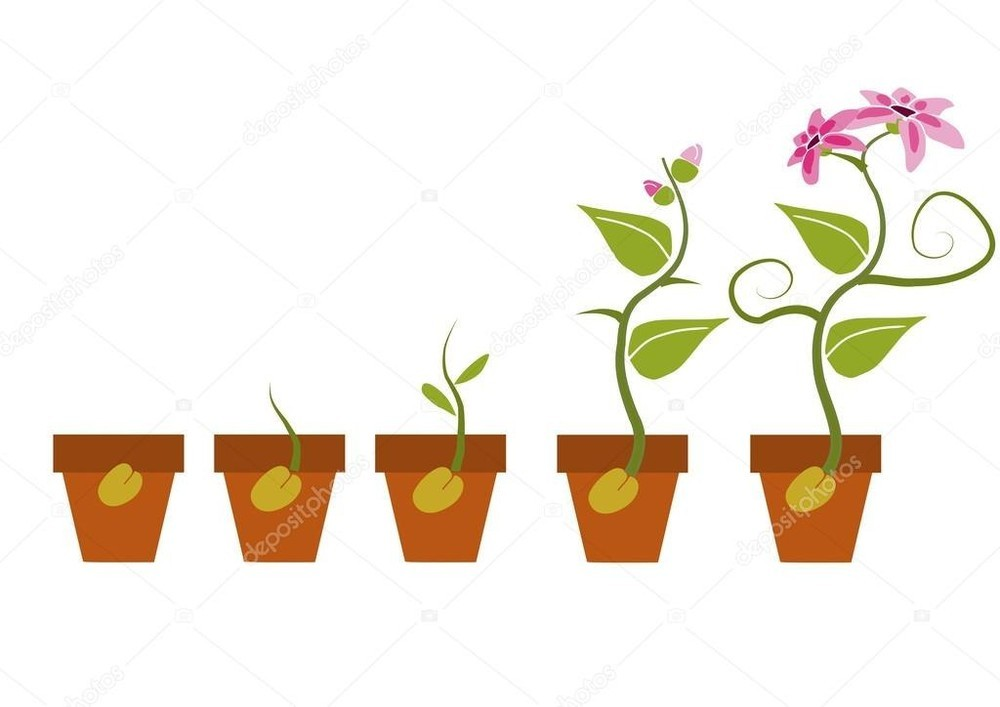 картинка семечко росток побег бутон цветок вариантом застекления