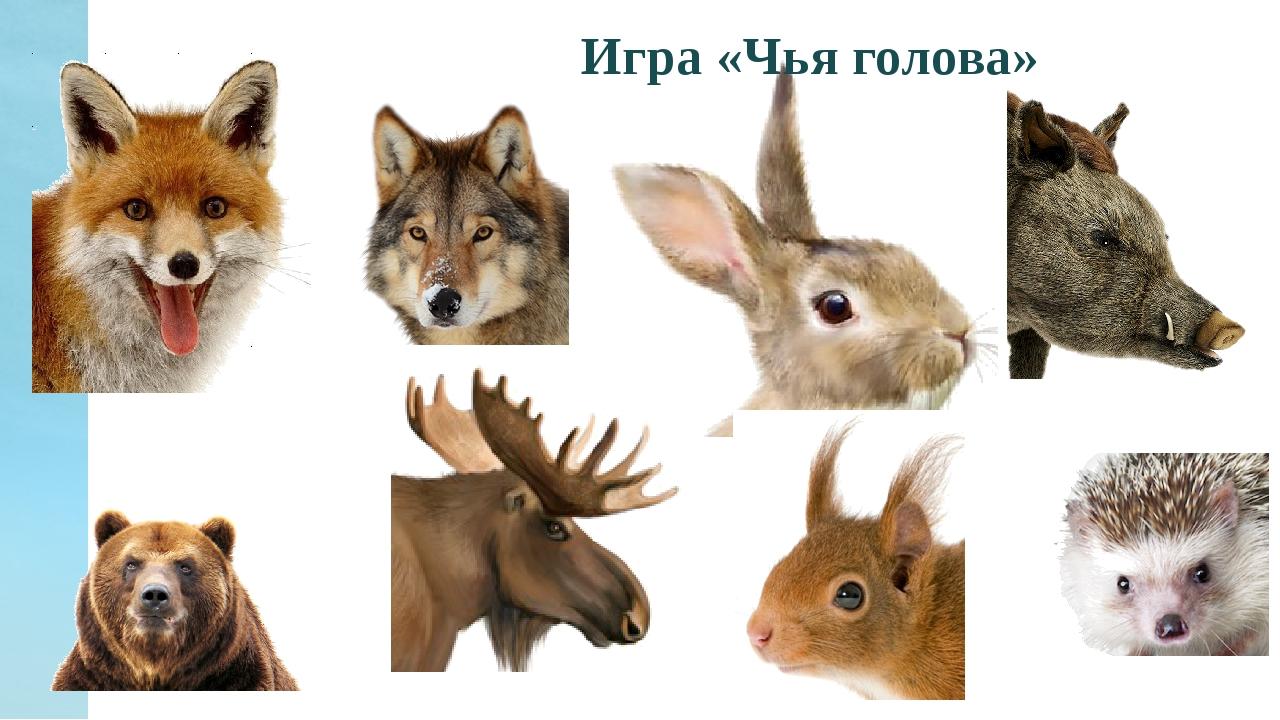 дороге картинки ушей животных диких тех