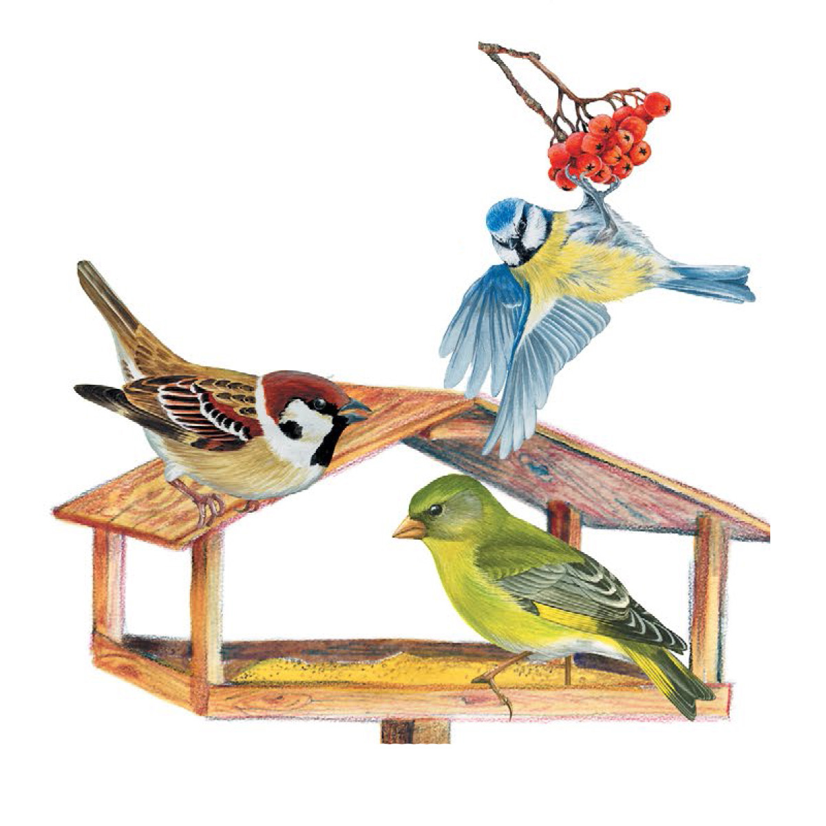 картинки птиц на кармушках мне совесть позволит