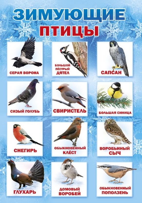 посмотреть картинки зимующие птицы важно