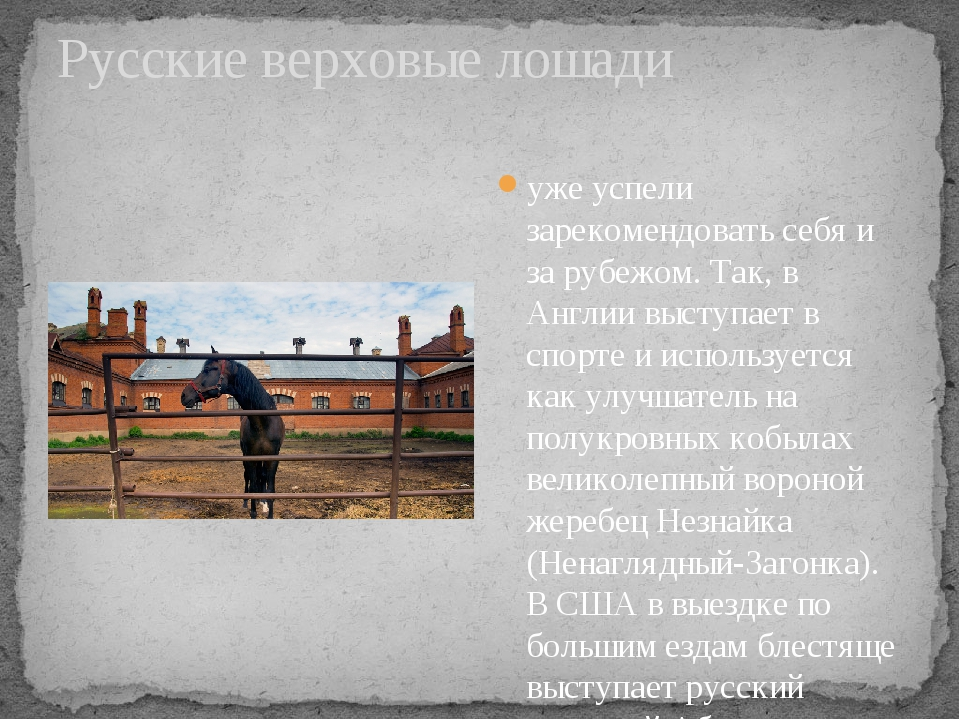 Русские верховые лошади уже успели зарекомендовать себя и за рубежом. Так, в...