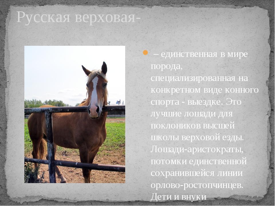 Русская верховая- – единственная в мире порода, специализированная на конкрет...