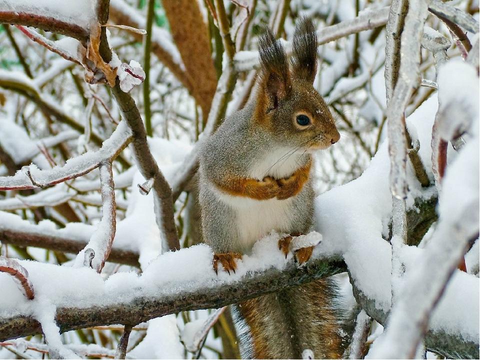 компетентность картинки животных в лесу зимой облицовочная плитка для
