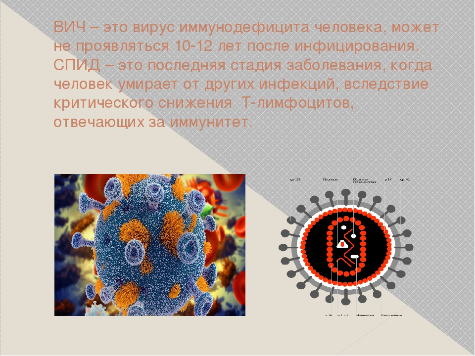 ВИЧ – это вирус иммунодефицита человека, может не проявляться 10-12 лет после...