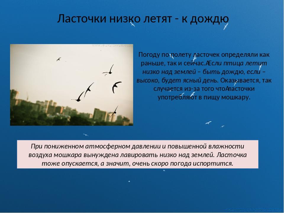 Ласточки низко летят - к дождю Погоду по полету ласточек определяли как раньш...