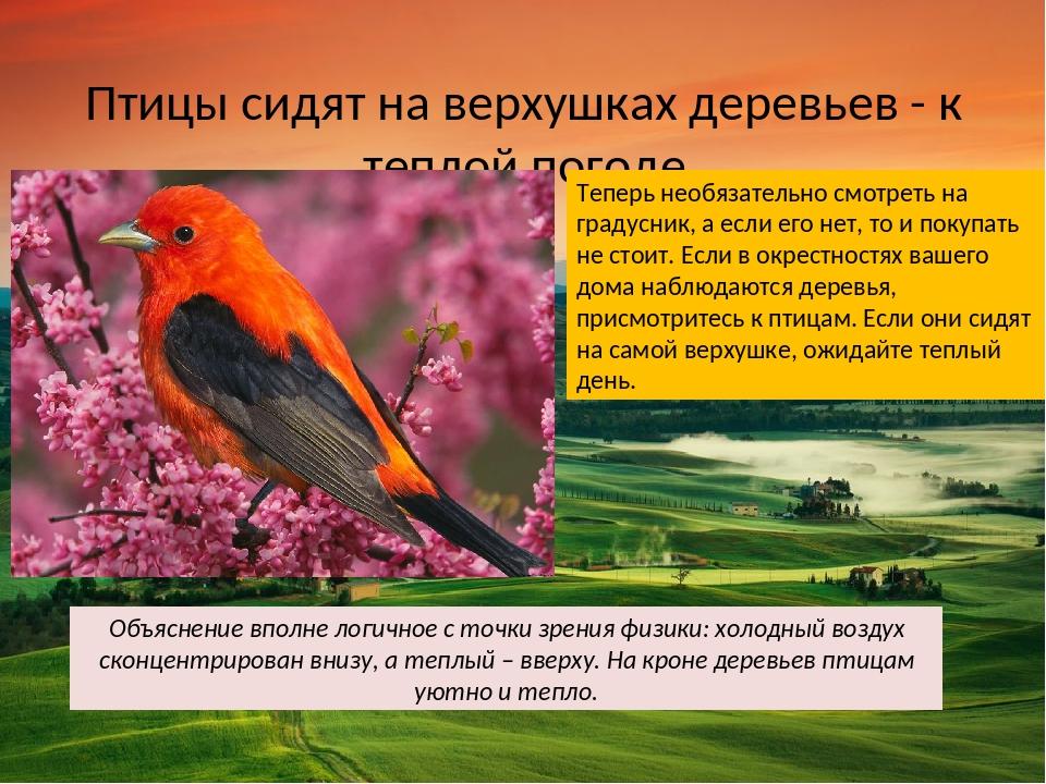 Птицы сидят на верхушках деревьев - к теплой погоде Теперь необязательно смот...