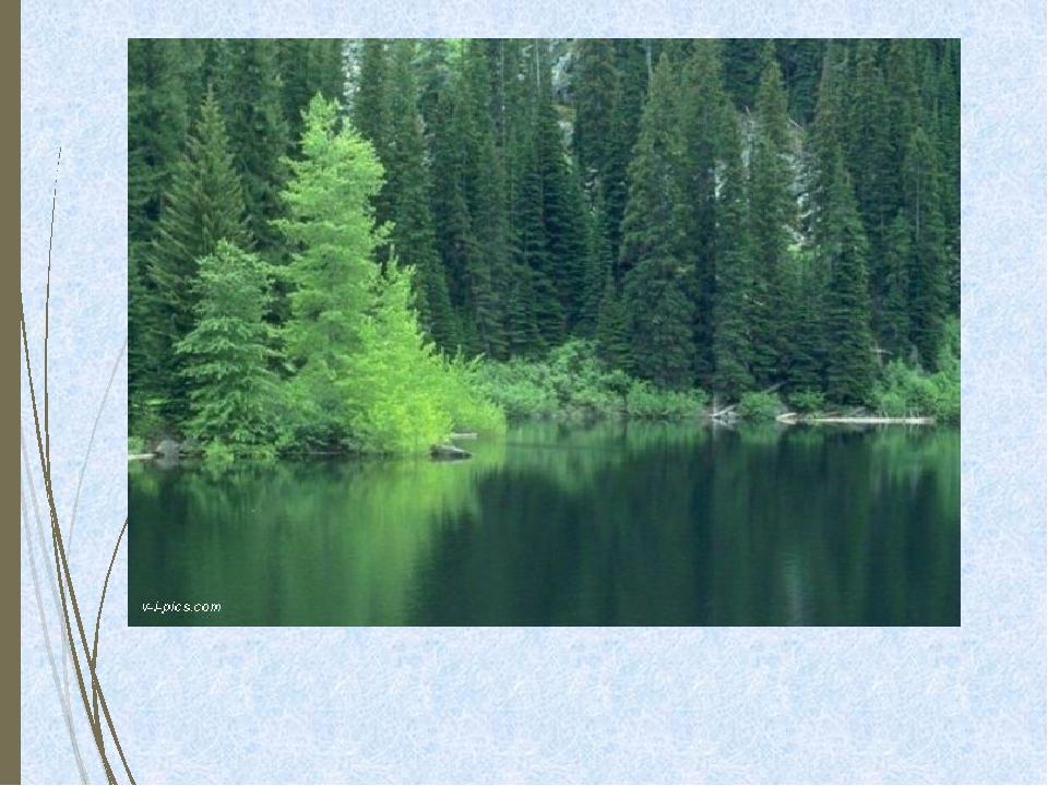 Леса необходимы для регулирования состава газов и уровня влажности в атмос...