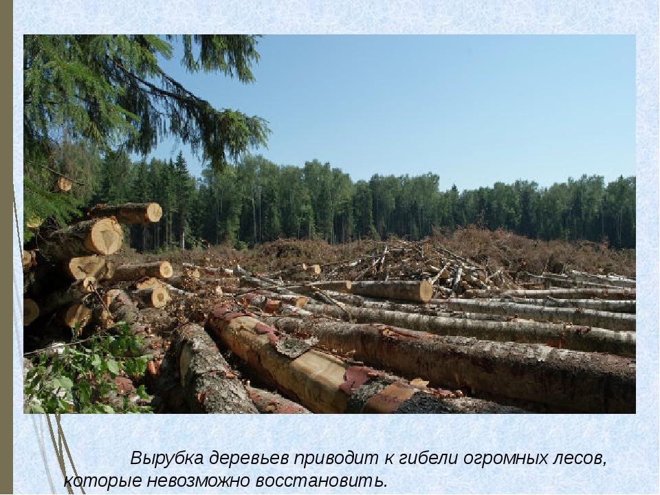 Вырубка деревьев приводит к гибели огромных лесов, которые невозможно в...