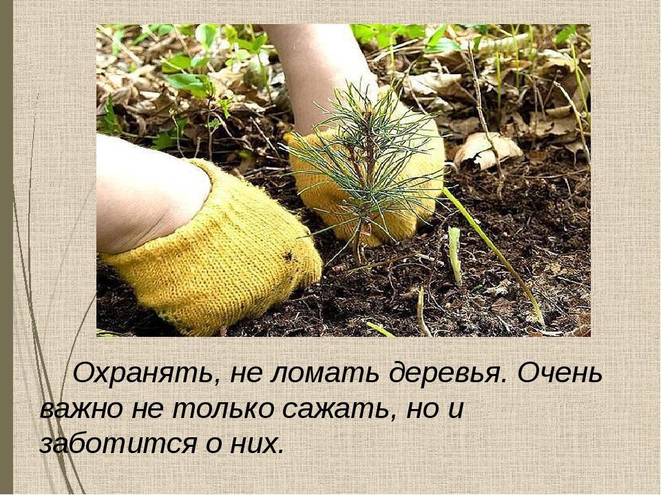 Охранять, не ломать деревья. Очень важно не только сажать, но и заботится о...