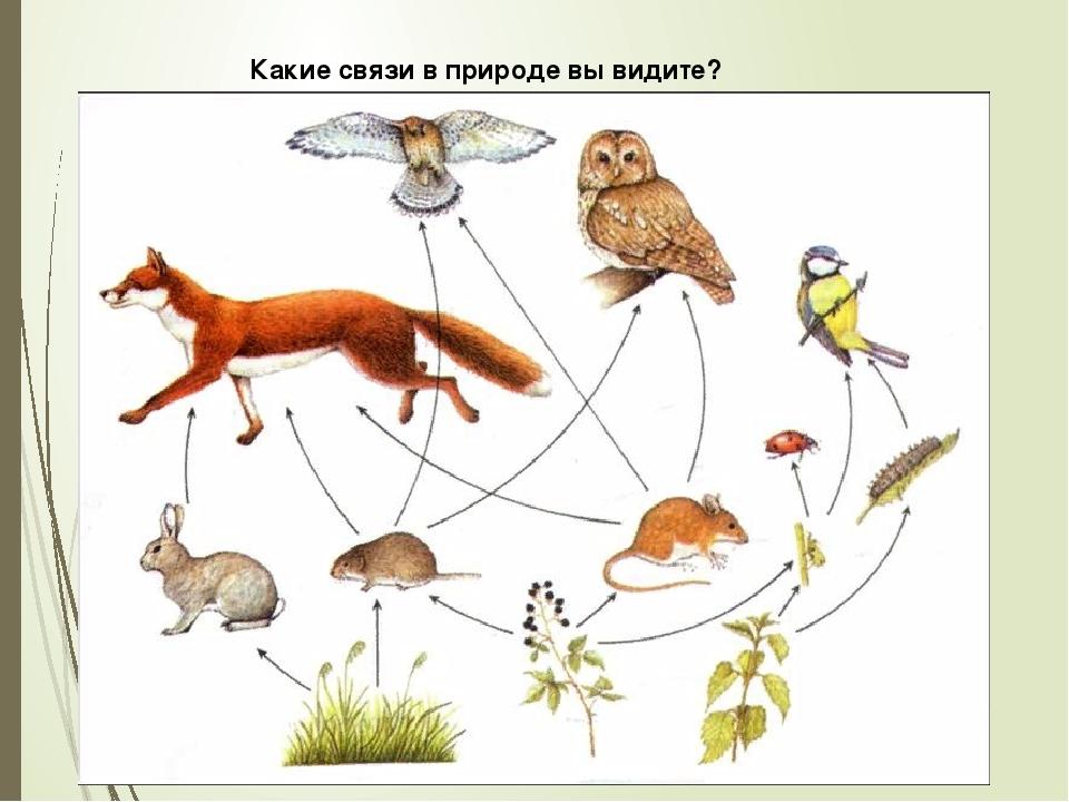 Какие связи в природе вы видите?