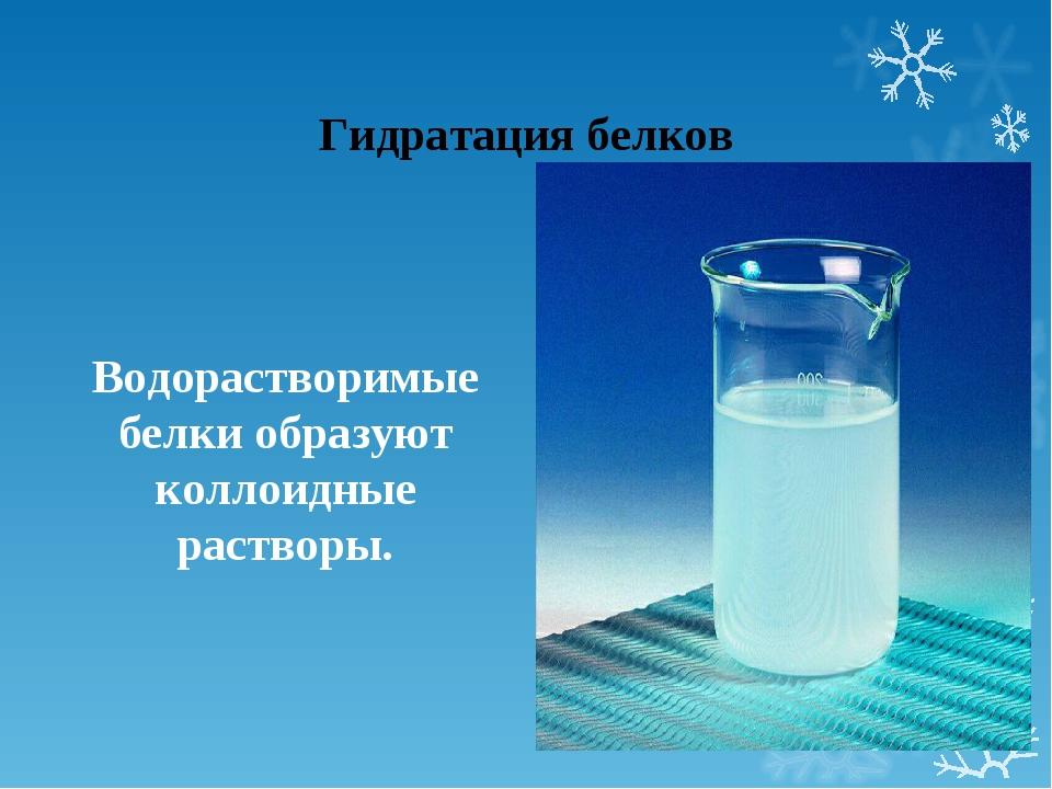 Гидратация белков Водорастворимые белки образуют коллоидные растворы.