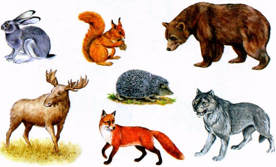 спутниковая дикие и домашние животные картинки к занятию зарылись землю