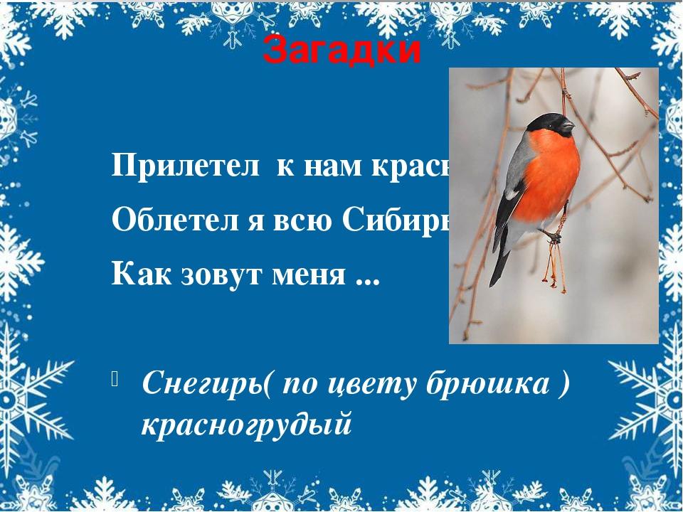 Загадки Прилетел к нам красногрудый Облетел я всю Сибирь. Как зовут меня ......