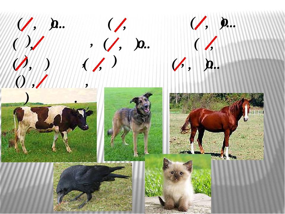 (К, к)...рова (Б, б)урёнка, (С, с)…бака (Д, д)ружок, (К, к)онь (В, в)оронок,...