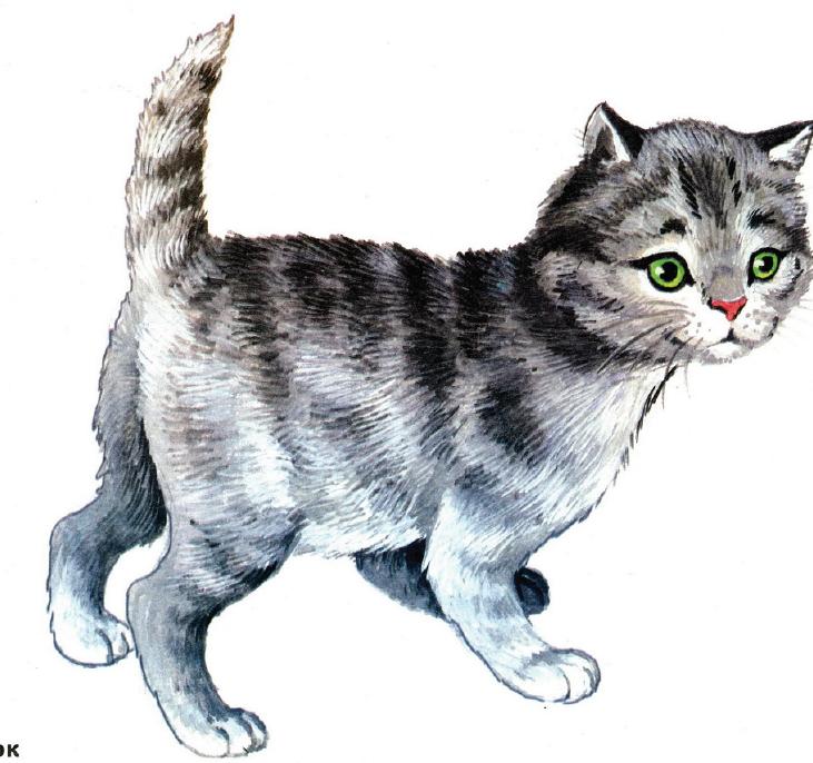 Животные в картинках для детей кошечка