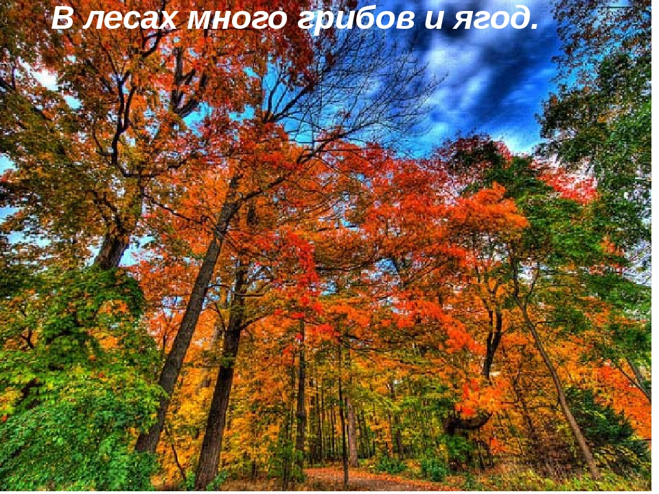 В лесах много грибов и ягод.