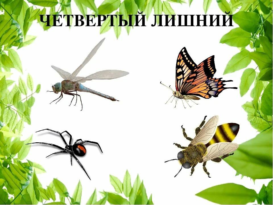 тоже картинки для презентации по теме насекомые ехал сзади