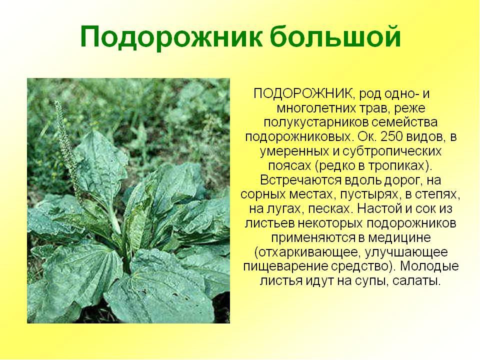 модель картинка с рассказами лекарственные растений самых