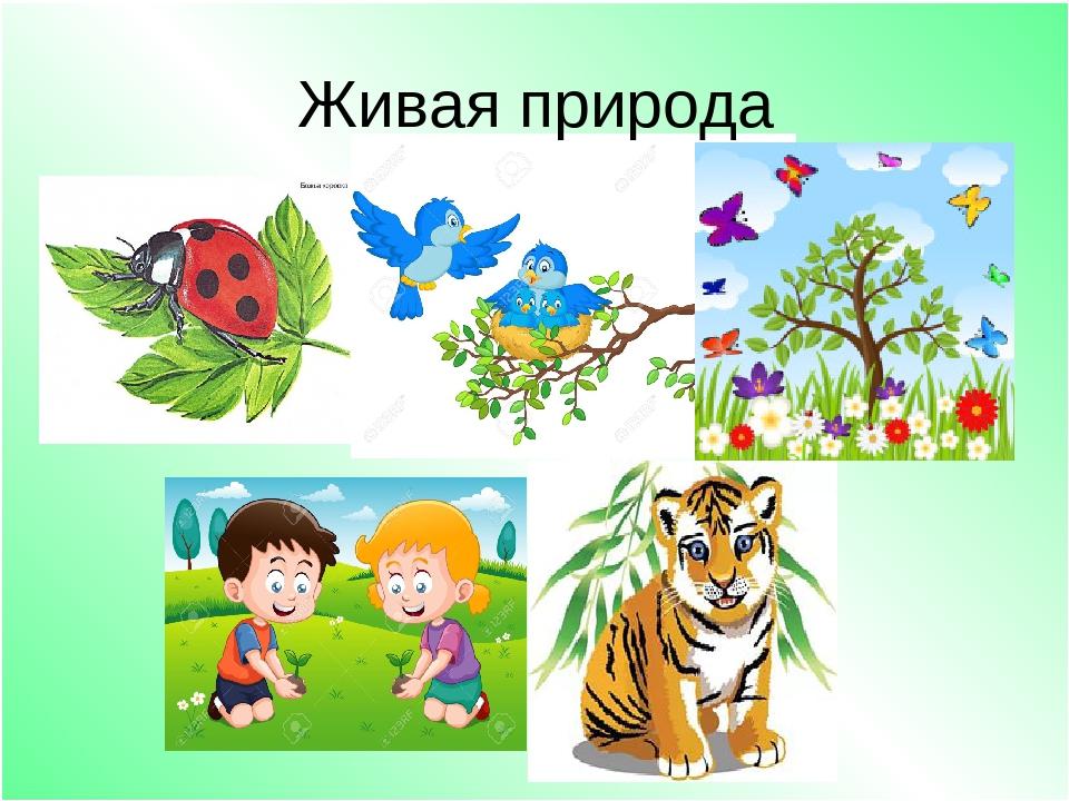 Картинки с неживой природой для детского сада