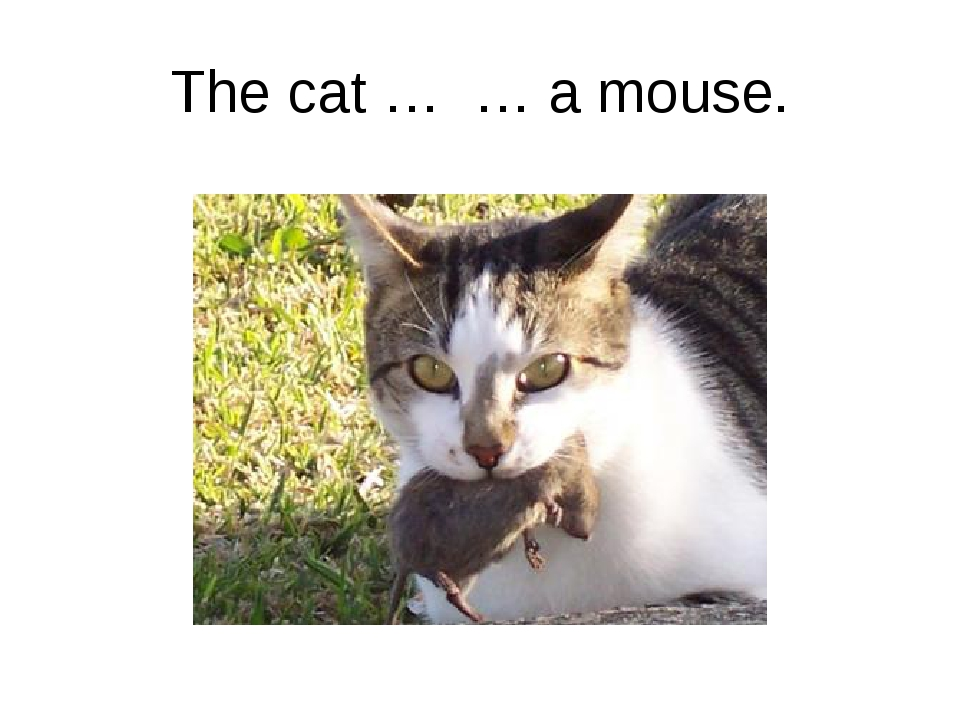 The cat … … a mouse.